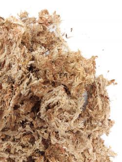 Sfagno disidratato in fibre - provenienza CHILE
