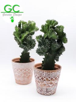 """Cactus in vaso """"Mexico"""""""