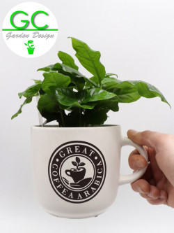 "Coffee plant in large mug ""WHITE"""