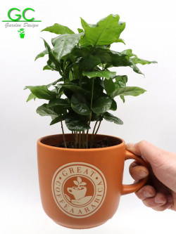 "Coffee plant in large mug ""Cappuccino"""