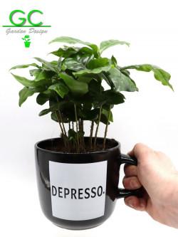 """Pianta del caffe' in tazza grande """"Depresso"""""""
