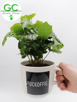 """Pianta del caffe' in tazza grande """"Fuckoffie"""""""