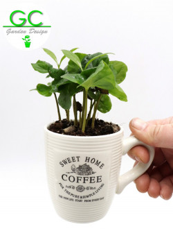 Coffee plant in small mug
