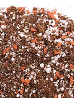 Special Soil mix  cephalotus follicularis and drosophyllum