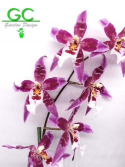 """Orchidea Cambria """"Purple flower"""""""