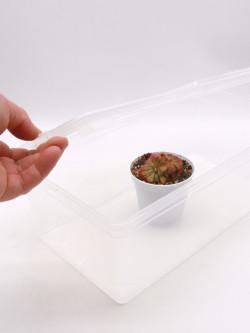 Vasca semi-trasparente  SMALL con coperchio
