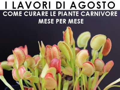 WHAT TO DO WITH CARNIVOROUS PLANTS IN AUGUST : AN EASY GUIDE IN ITALIAN